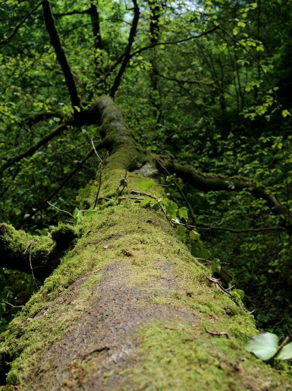 Sylvothérapie et force des arbres