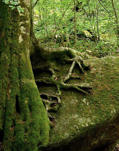 Sylvotherapie et force des arbres