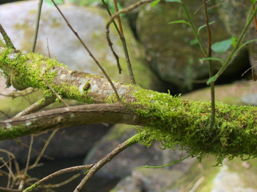 la force des arbres - sylvothérapie