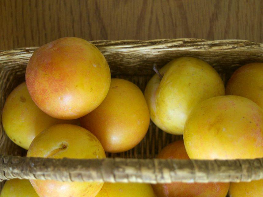prunes jaune au panieR
