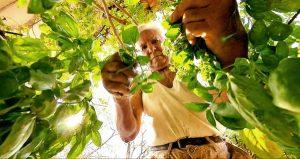 Permaculture : Le merveilleux potager de mon grand-père