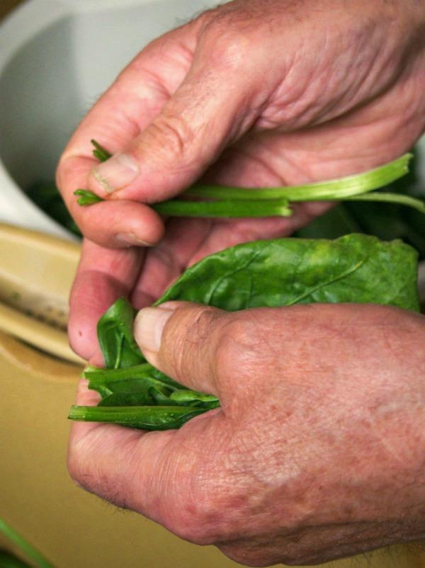 Leçons de cuisine en épinards