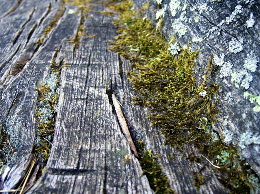 Banc de bois brut - Chemin de l'Ours - Neyrac le vieux - Ardèche