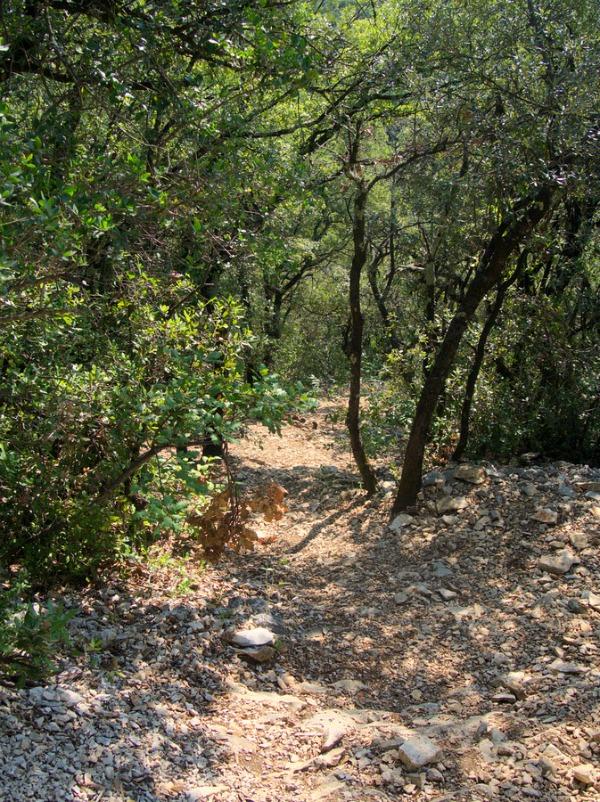 Forêt de chênes de Lussan