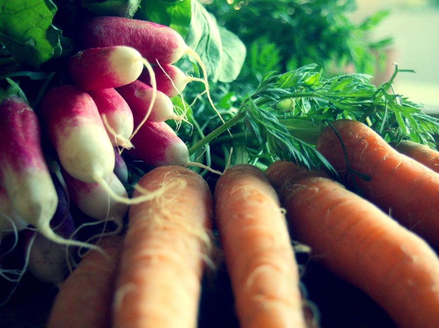 Détox douce et hydrolat de carotte sauvage