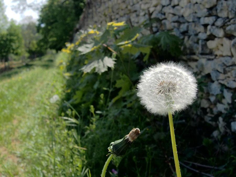 Inné et Acquis en Naturopathie